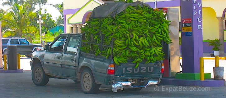 Banana Transport to Belize Market