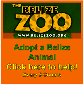 Belize Zoo Adopt an Animal Expat Belize