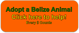 Click to Help The BELIZE ZOO