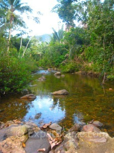 Belize Terrain - Stream in Belize Cayo DIstrict - Geography of Belize
