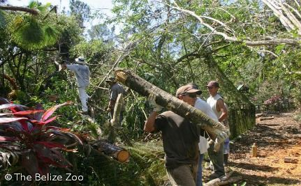 The Belize Zoo cleanup from Hurricane Richard