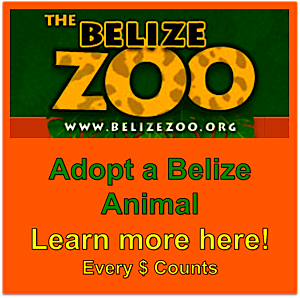 Belize Zoo Learn more about how to Adopt an Animal